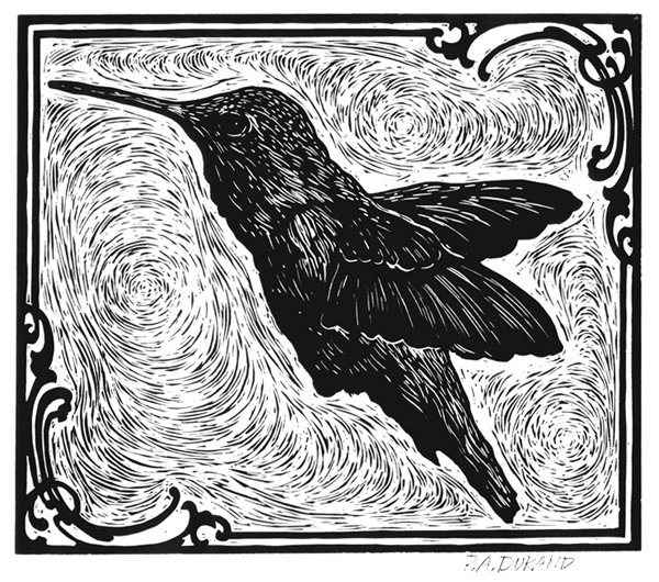 "Lino-cut ""HUMMING BIRD"" By Peter A. Durand"