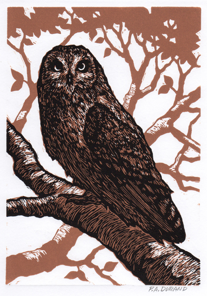 "Lino-cut ""OWL"" By Peter A. Durand"