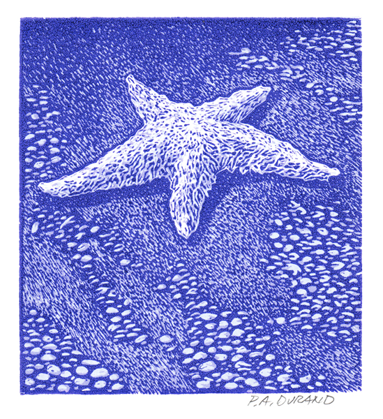"Lino-cut ""STAR FISH"" By Peter A. Durand"