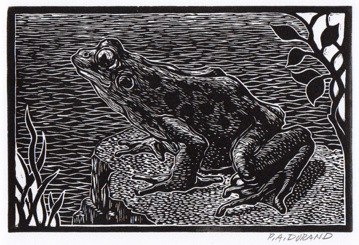 "Lino-cut ""FROG SMALL"" By Peter A. Durand"