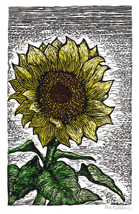 "Lino-cut ""SUNFLOWER"" By Peter A. Durand"